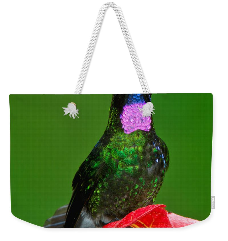 Tourmaline Sunangel Weekender Tote Bag featuring the photograph Tourmaline Sunangel by Anthony Mercieca