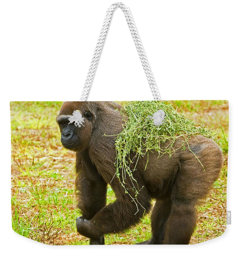 Nature Weekender Tote Bag featuring the photograph Western Lowland Gorilla Female by Millard H. Sharp