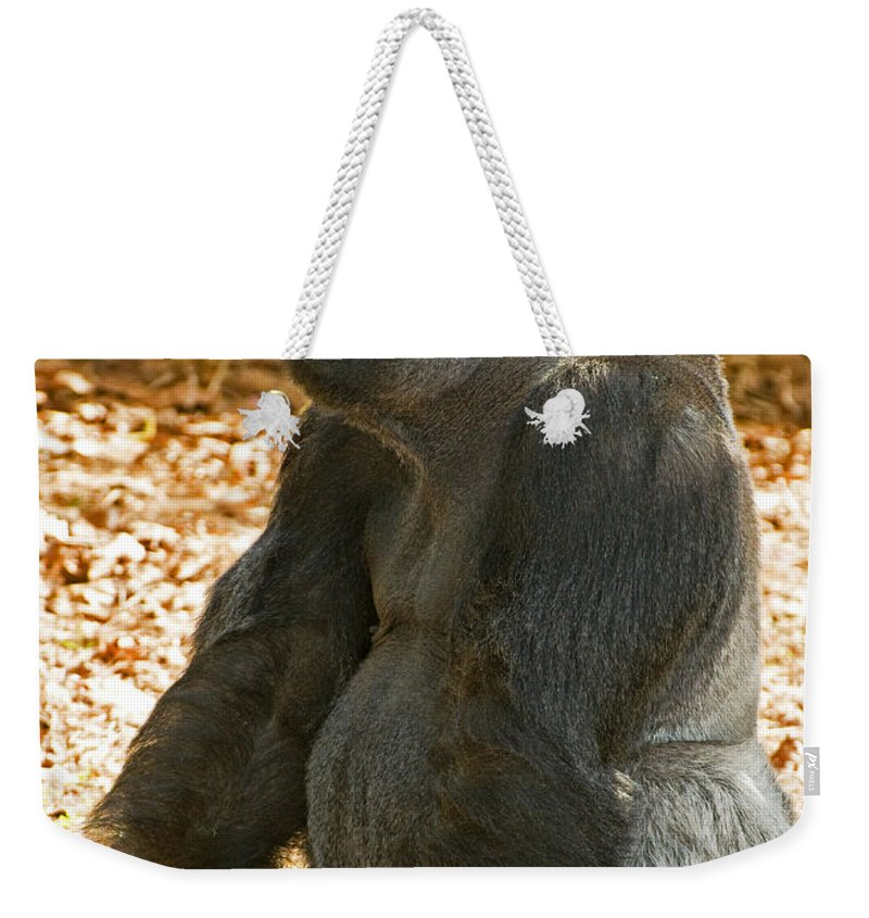 Nature Weekender Tote Bag featuring the photograph Western Lowland Gorilla Male by Millard H. Sharp