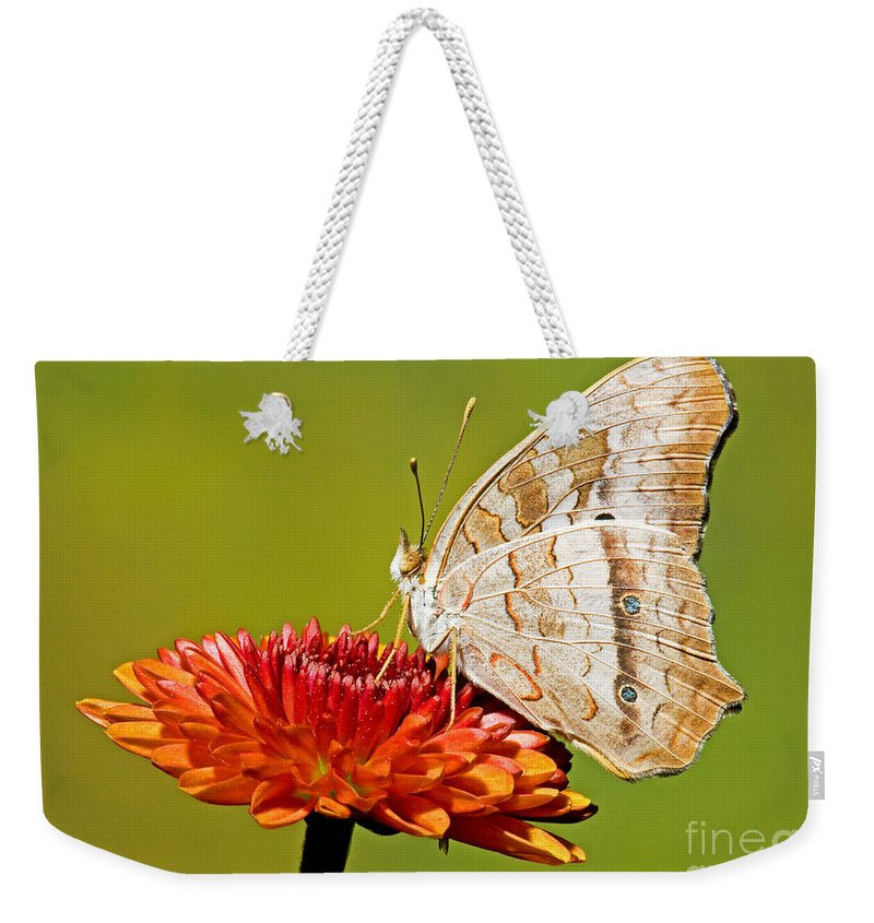 White Peacock Butterfly Weekender Tote Bag featuring the photograph White Peacock Butterfly by Millard H. Sharp