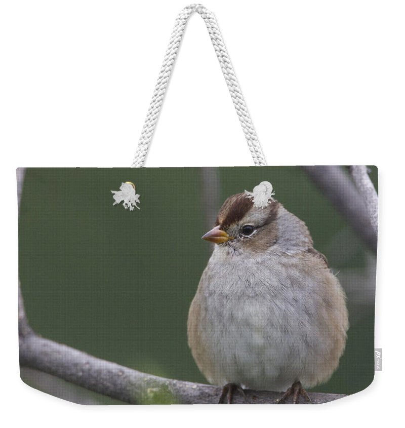 Doug Lloyd Weekender Tote Bag featuring the photograph Whitecrowned Sparrow by Doug Lloyd