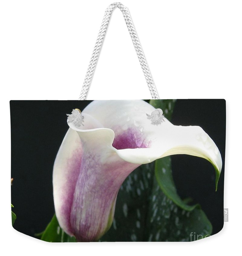 Zantedeschia Weekender Tote Bag featuring the photograph Zantedeschia Named Picasso by J McCombie
