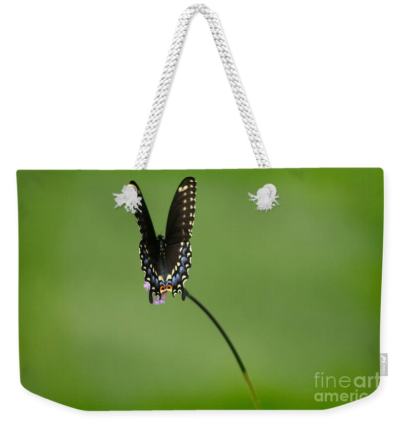 Butterfly Weekender Tote Bag featuring the photograph Black Swallowtail Butterfly by Karen Adams