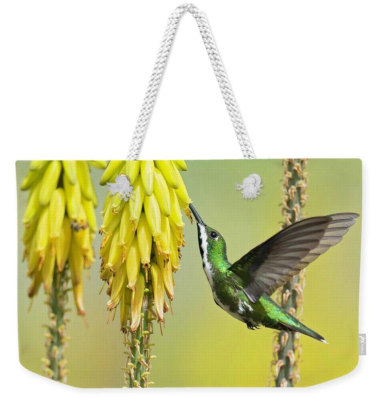 Birds Weekender Tote Bag featuring the photograph Black-throated Mango by Juan Jose Arango