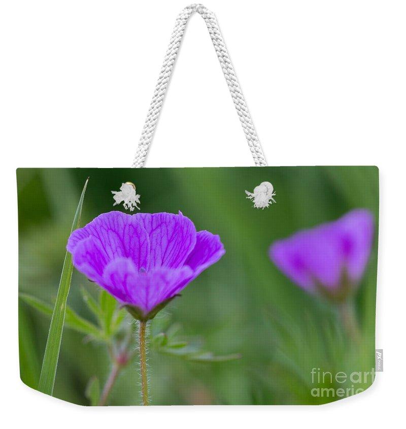 Bloody Cranesbill Weekender Tote Bag featuring the photograph Bloody Geranium Wild Flower by Jivko Nakev