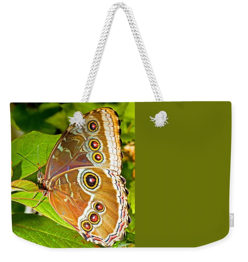Fauna Weekender Tote Bag featuring the photograph Blue Morpho Butterfly by Millard H Sharp