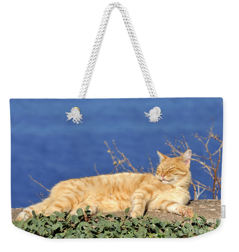 Cat; Cats; Feline; Tabby; Animal; Sleep; Sleeping; Rest; Resting; Free; Alone; Greece; Hellas; Greek; Hellenic; Hydra; Argosaronic; Saronic; Gulf; Islands; Holidays; Island; Vacation; Travel; Trip; Voyage; Journey; Tourism; Touristic; Red; Sea; Sunshine Weekender Tote Bag featuring the photograph Cat In Hydra Island by George Atsametakis
