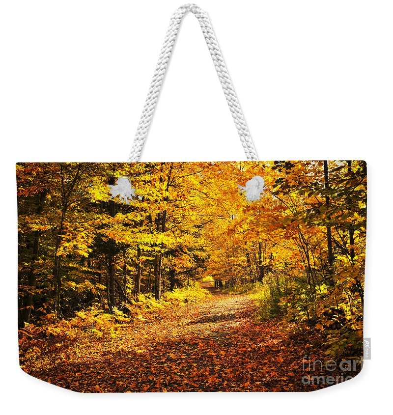 Fall Weekender Tote Bag featuring the photograph Fall Forest by Elena Elisseeva