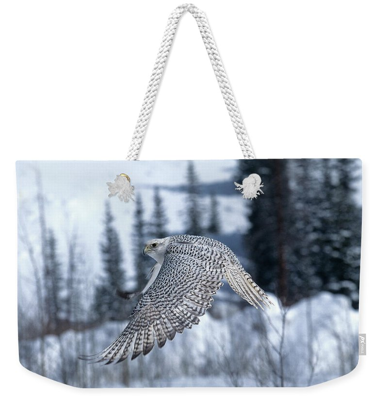 Adult Weekender Tote Bag featuring the photograph Faucon Gerfaut Falco Rusticolus by Gerard Lacz