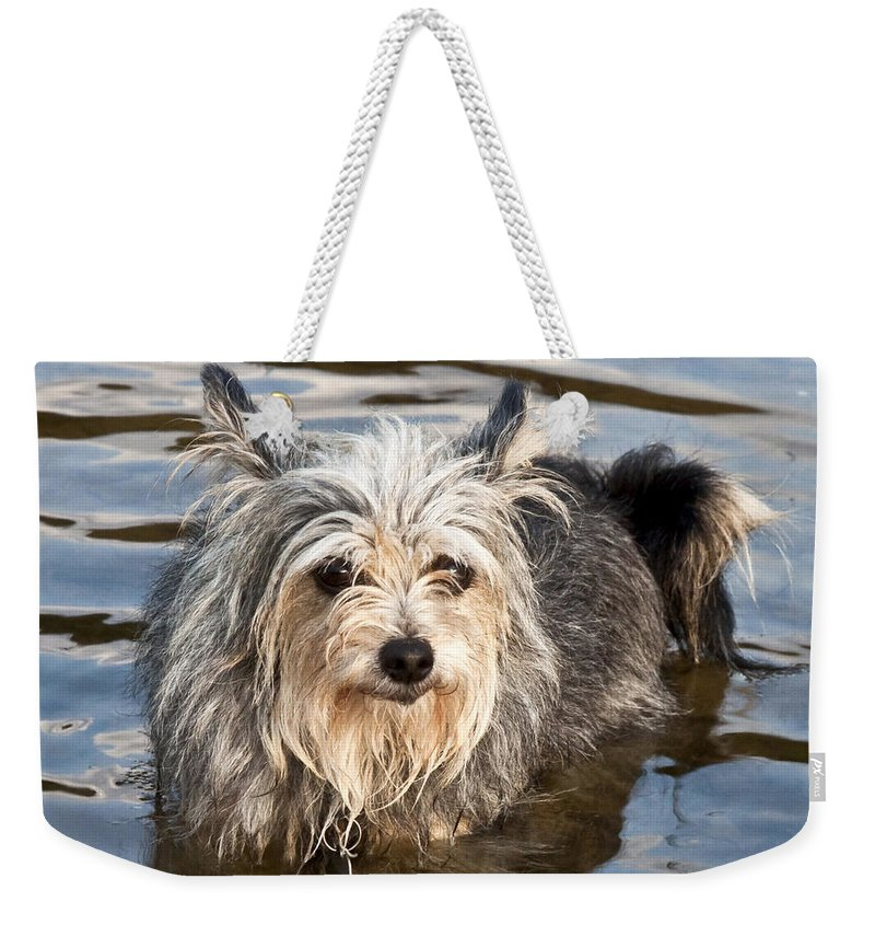 Gremlin Weekender Tote Bag featuring the photograph Gremlin by Jeannette Hunt
