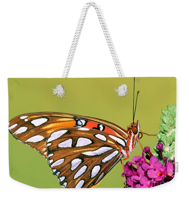 Insect Weekender Tote Bag featuring the photograph Gulf Fritillary Butterfly by Millard H. Sharp