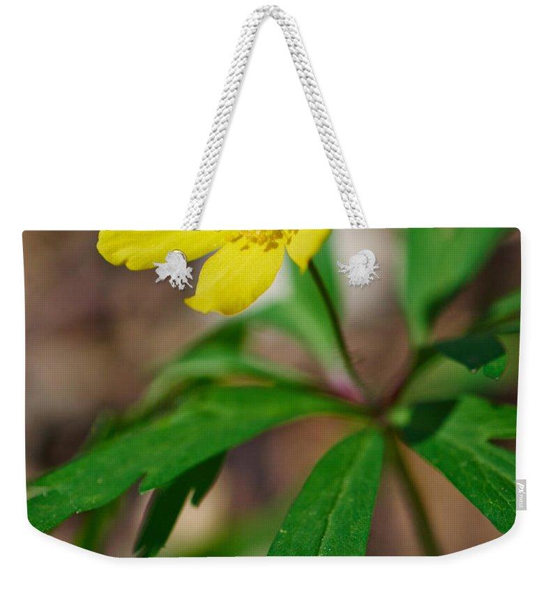 Lehto Weekender Tote Bag featuring the photograph Yellow Wood Anemone by Jouko Lehto