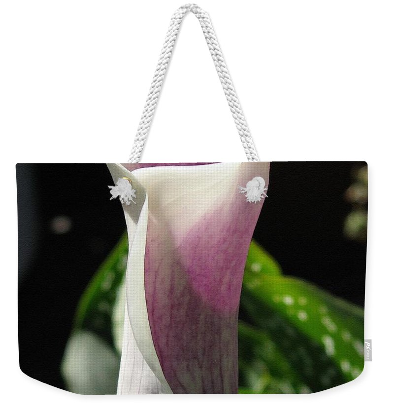 Zantedeschia Weekender Tote Bag featuring the painting Zantedeschia Named Picasso by J McCombie