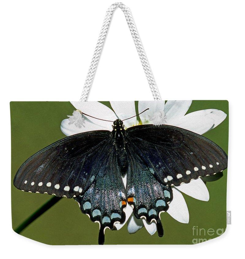 Fauna Weekender Tote Bag featuring the photograph Eastern Black Swallowtail by Millard H. Sharp