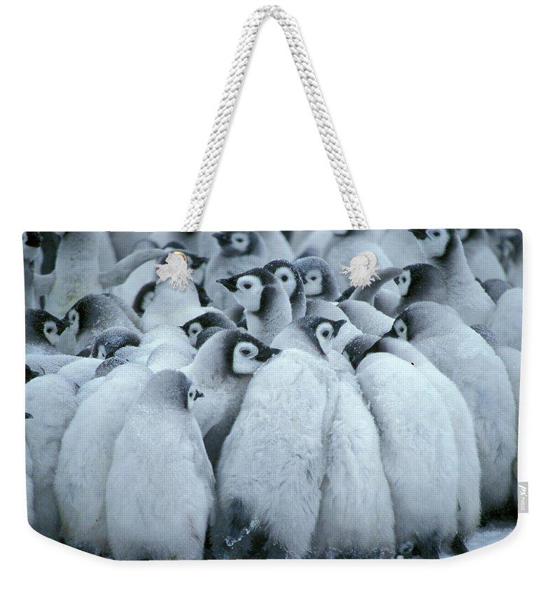 Penguin Weekender Tote Bag featuring the photograph Emperor Penguin Aptenodytes Forsteri by Fritz Polking - Vwpics