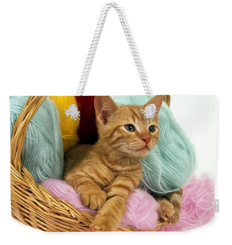 Animal Weekender Tote Bag featuring the photograph Europeen Roux Tabby by Gerard Lacz