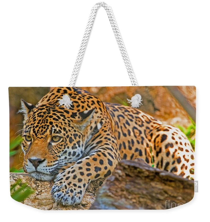 Animal Weekender Tote Bag featuring the photograph Jaguar by Millard H. Sharp