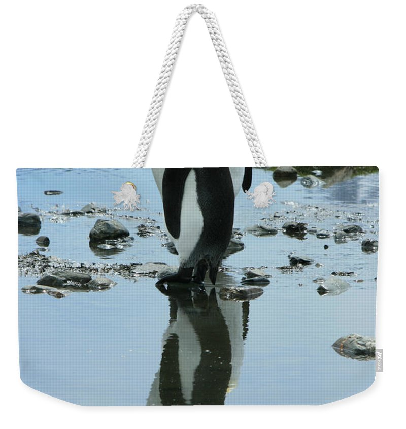Reflection Weekender Tote Bag featuring the photograph King Penguins by Amanda Stadther