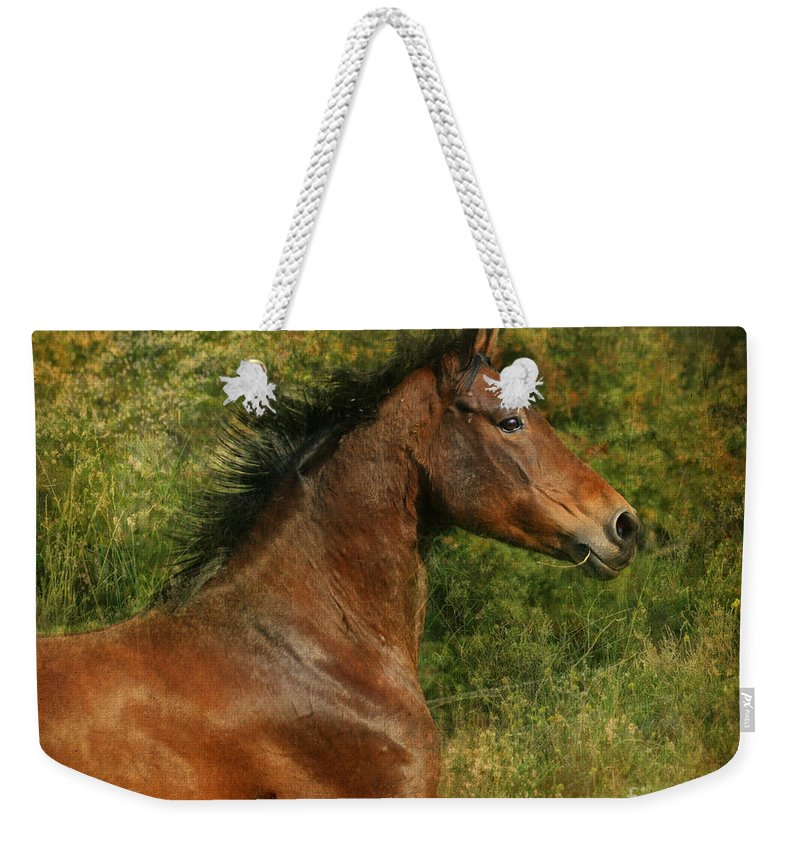 Horse Weekender Tote Bag featuring the photograph The Bay Horse by Angel Tarantella