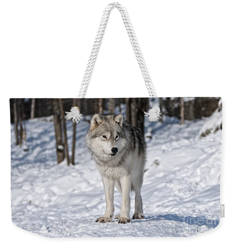 Arctic Wolf Photography Weekender Tote Bag featuring the photograph Arctic Wolf by Wolves Only