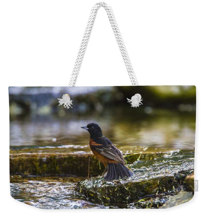 Doug Lloyd Weekender Tote Bag featuring the photograph Baltimore Oriole by Doug Lloyd