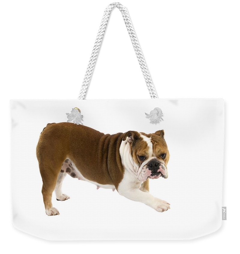 Adult Weekender Tote Bag featuring the photograph Bulldog Anglais by Gerard Lacz