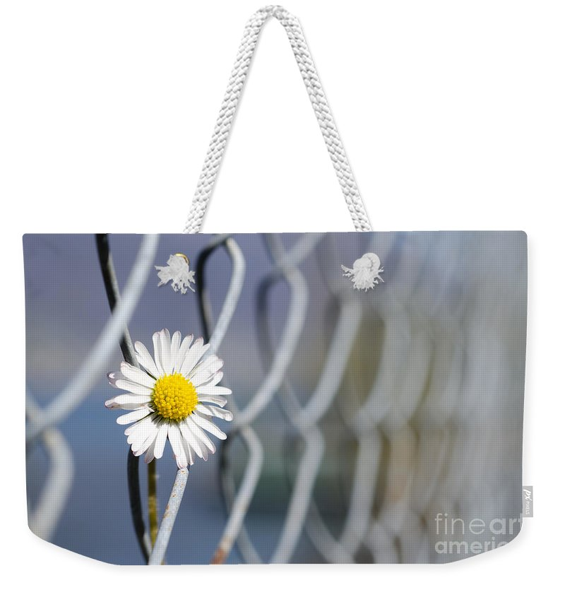 Flower Weekender Tote Bag featuring the photograph Daisy Flower by Mats Silvan
