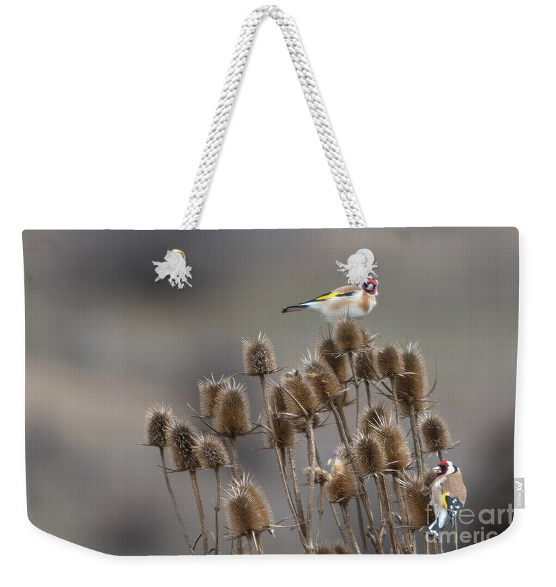 Aves Weekender Tote Bag featuring the photograph European Goldfinch by Jivko Nakev