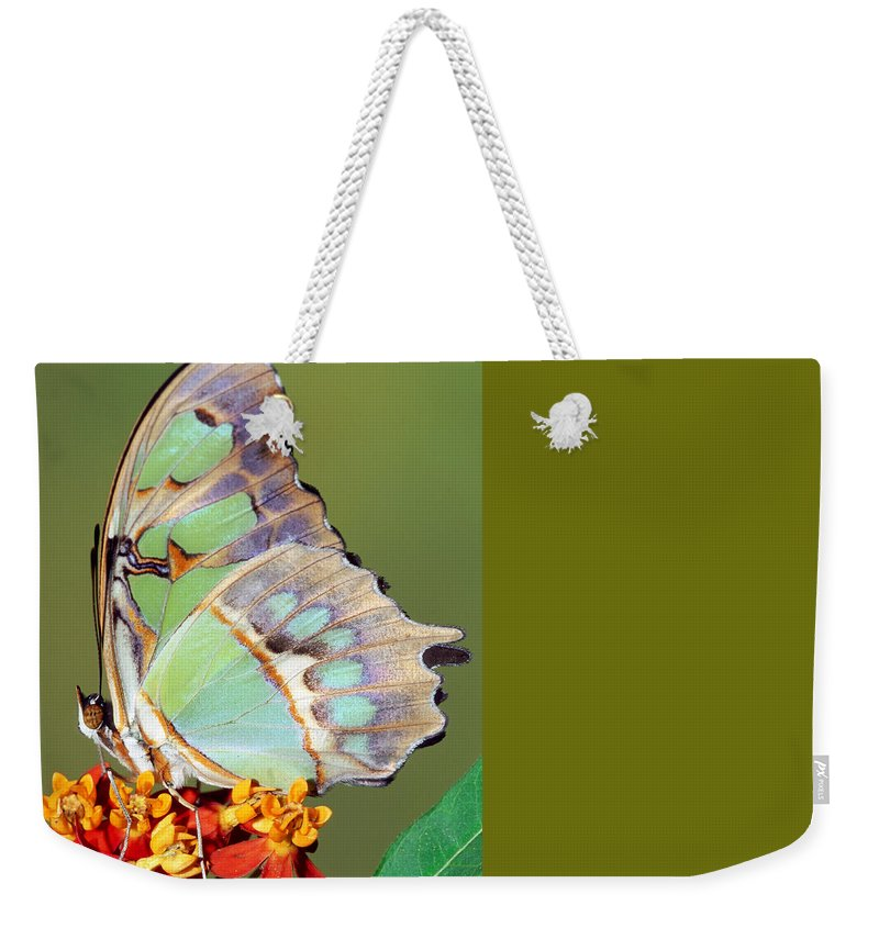 Malachite Butterfly Weekender Tote Bag featuring the photograph Malachite Butterfly by Millard H Sharp