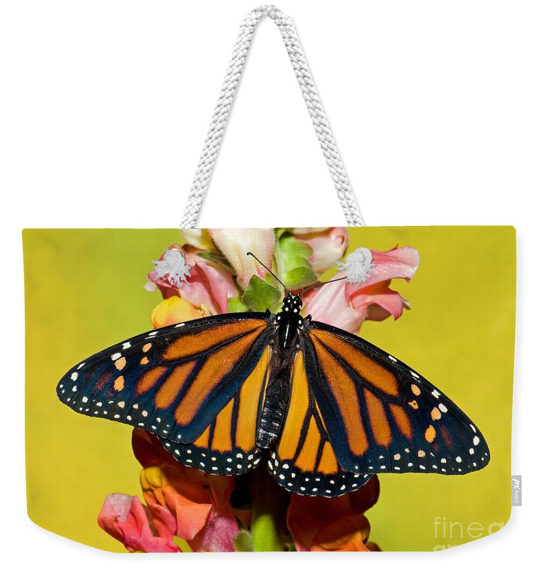 Monarch Butterfly Weekender Tote Bag featuring the photograph Monarch Butterfly by Millard H. Sharp