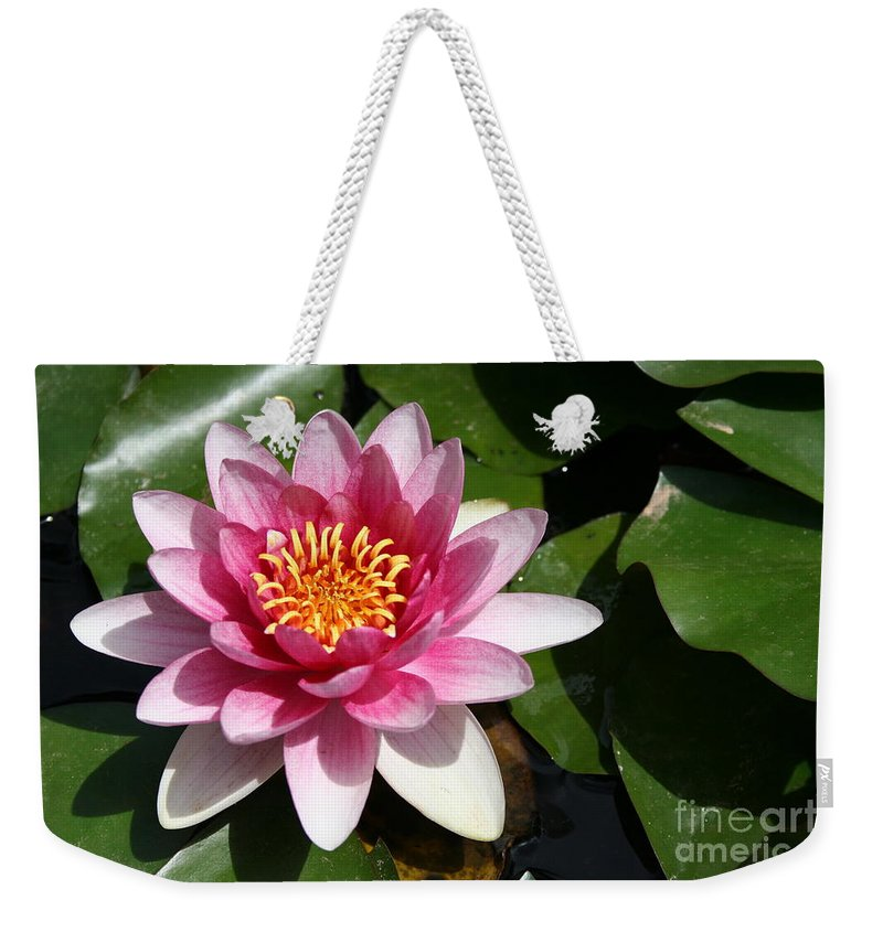 Lotus Weekender Tote Bag featuring the photograph Pink Lotus by Christiane Schulze Art And Photography