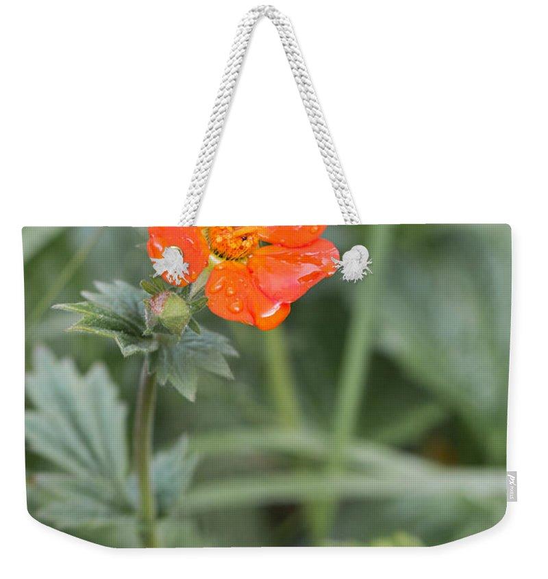 Bulgaria Weekender Tote Bag featuring the photograph Scarlet Avens Orange Wild Flower by Jivko Nakev