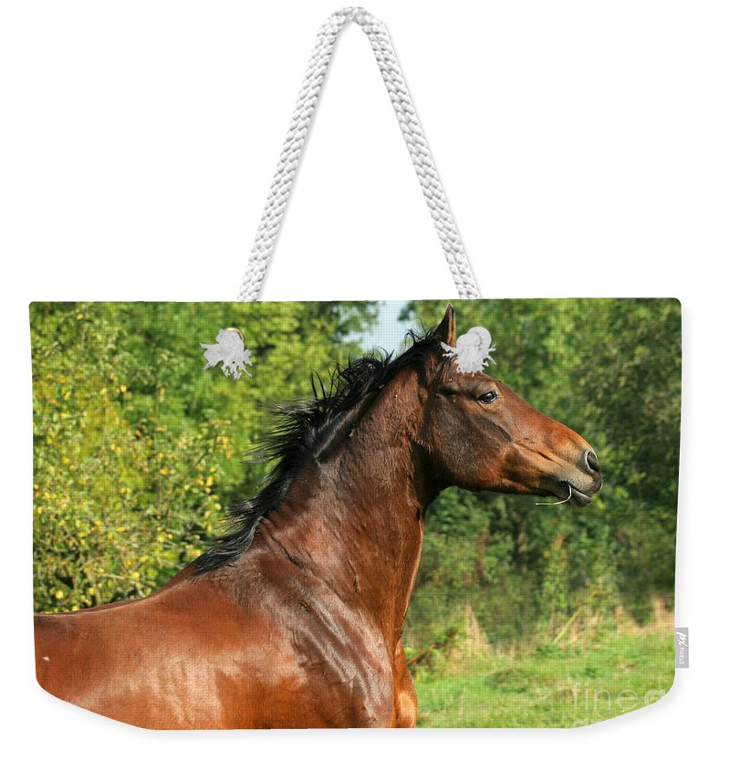Horse Weekender Tote Bag featuring the photograph The Bay Horse by Angel Ciesniarska
