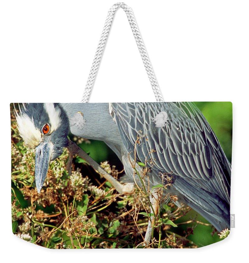 Designs Similar to Yellow-crowned Night Heron