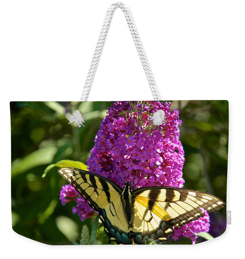 Butterfly Weekender Tote Bag featuring the photograph Yellow Tiger Swallowtail Papilio Glaucus Butterfly by Mark Dodd