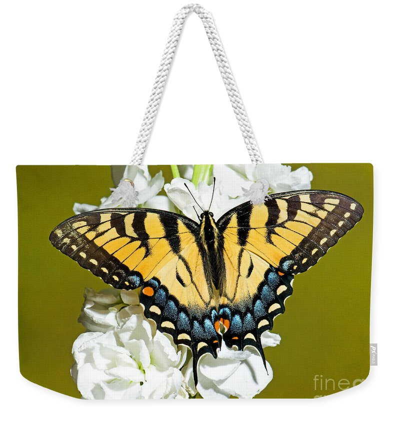 Nature Weekender Tote Bag featuring the photograph Eastern Tiger Swallowtail Butterfly by Millard H. Sharp