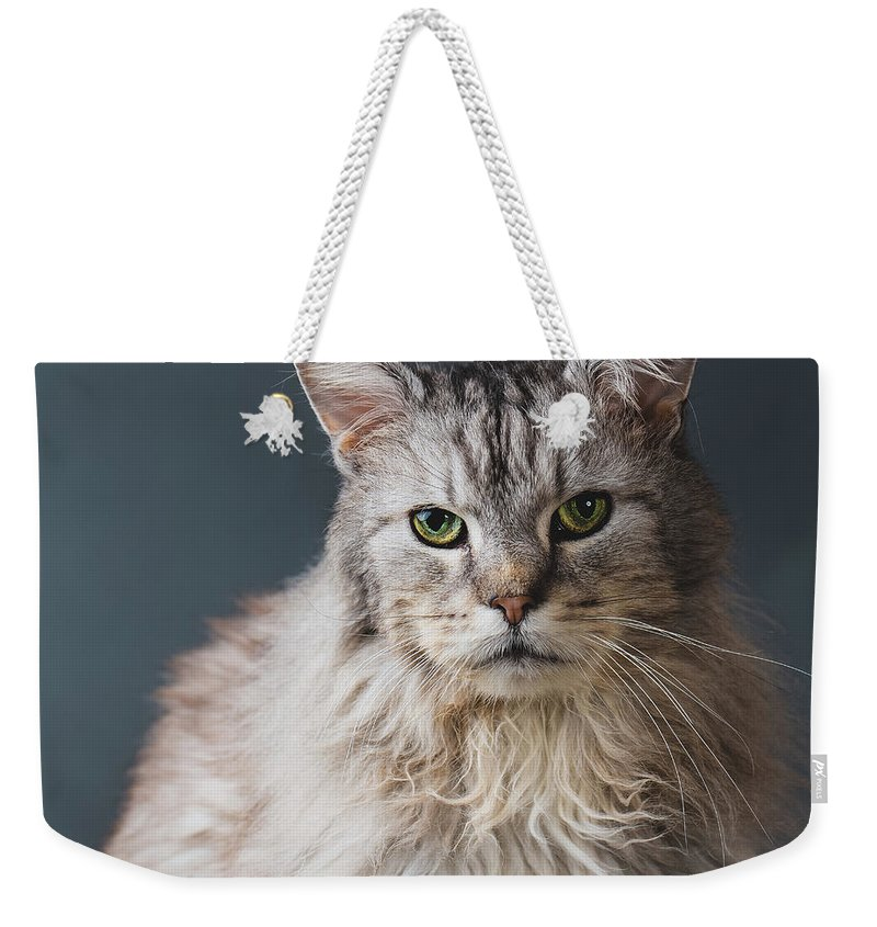 Pets Weekender Tote Bag featuring the photograph Fortunate Tails by Matt Porteous