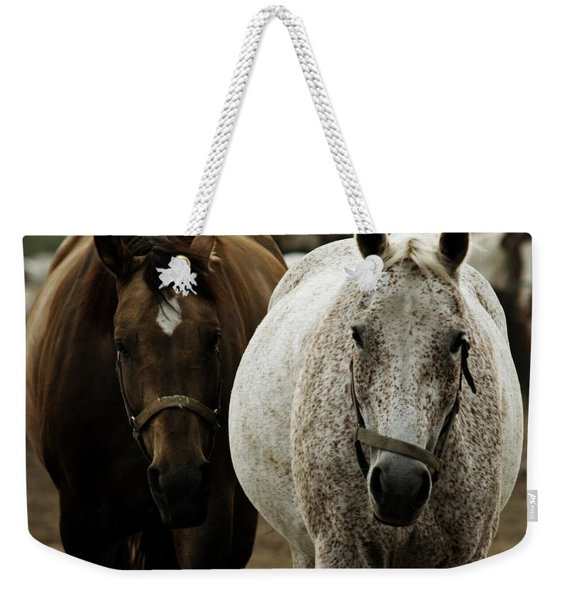 Horse Weekender Tote Bag featuring the photograph Horses by Angel Ciesniarska