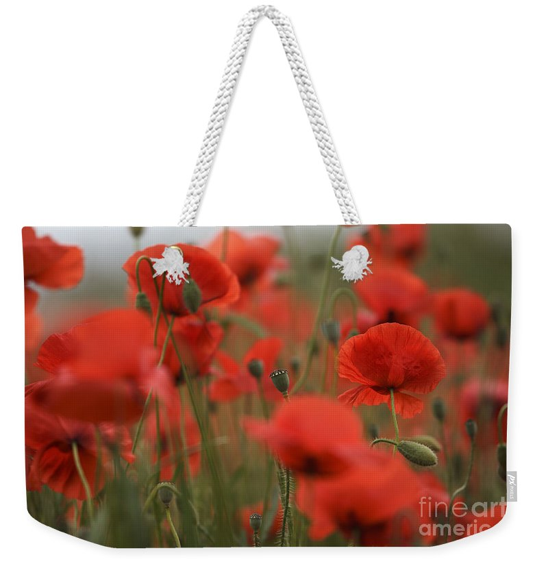 Poppy Weekender Tote Bag featuring the photograph Red by Nailia Schwarz