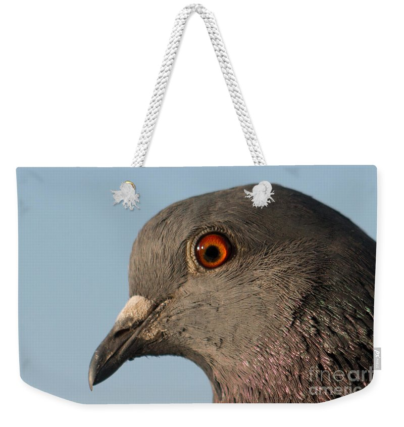 Animal Weekender Tote Bag featuring the photograph Rock Dove by Jivko Nakev