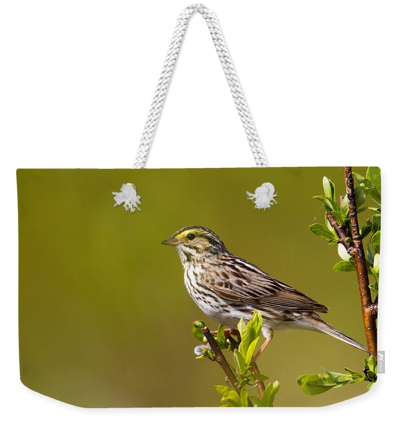 Doug Lloyd Weekender Tote Bag featuring the photograph Savannah Sparrow by Doug Lloyd