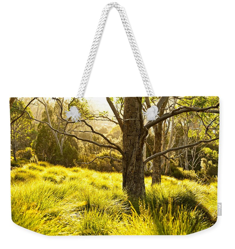 Autumn Weekender Tote Bag featuring the photograph A Bare Tree by U Schade