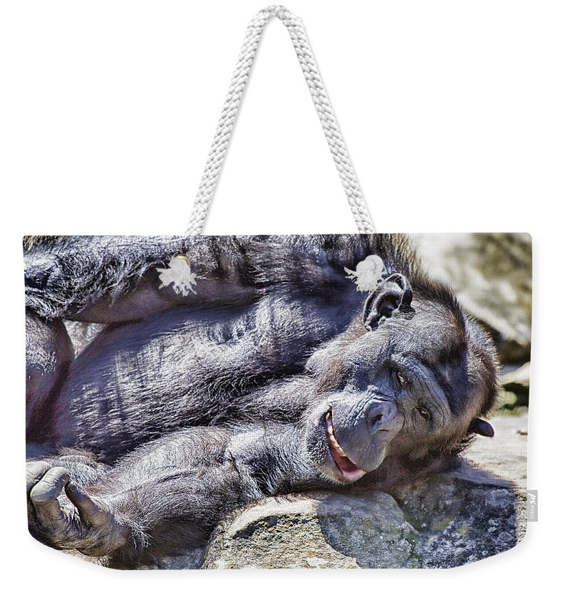 Chimpanzees Weekender Tote Bag featuring the photograph A Bit Like Us V3 by Douglas Barnard