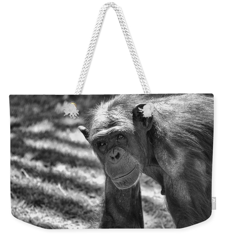 Chimpanzees Weekender Tote Bag featuring the photograph A Bit Like Us V5 by Douglas Barnard