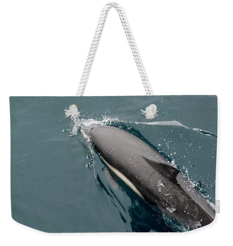 Barbara Steele Weekender Tote Bags