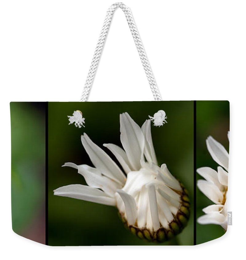 Bud Weekender Tote Bag featuring the photograph A Daisy Blooming by Sandra Clark