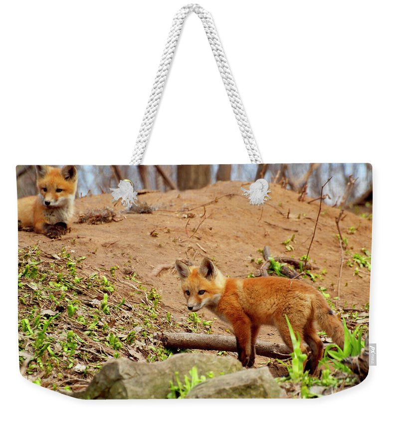 Red Foxes Weekender Tote Bag featuring the photograph A Day At The Den by Thomas Young