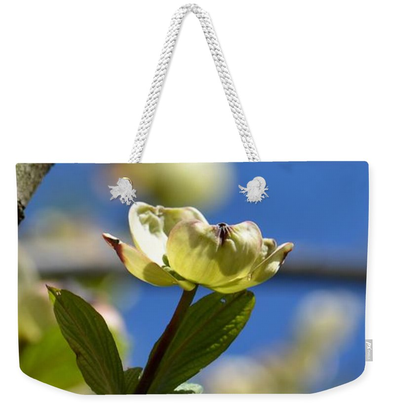 A Dogwood Blossom Weekender Tote Bag featuring the photograph A Dogwood Blossom by Maria Urso