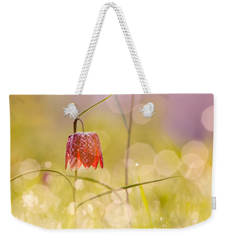 Fritillaria Meleagris Weekender Tote Bag featuring the photograph A Fairies' Place II _snake's Head Fritillary by Roeselien Raimond