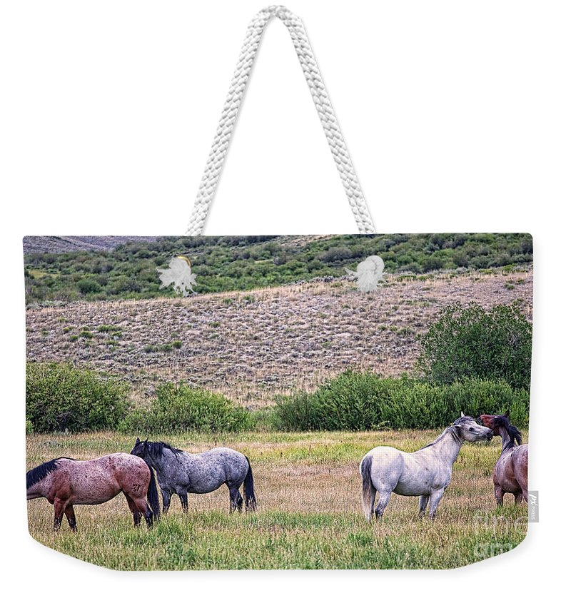 Horses Weekender Tote Bag featuring the photograph A Family Squabble by Jim Garrison
